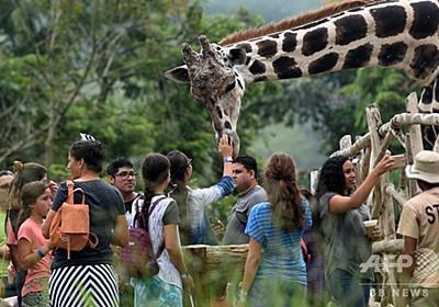 麻薬マネー途絶え…資金繰りにもがく動物園、ホンジュラス 写真21枚 国際ニュース:AFPBB News