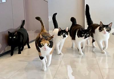 「ゴールデン帯のテレビ出演後にマジでムカつくことがあった」保護猫5匹のために豪邸を建てた音楽家の怒りに共感