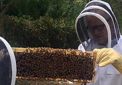 レッド・ホット・チリ・ペッパーズのフリーが養蜂を始める - amass
