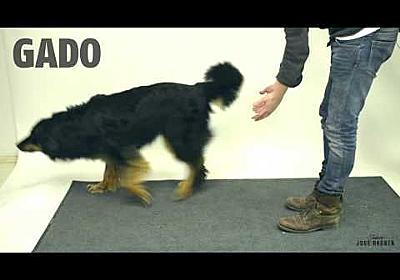 Taikuutta koirille - Magic for dogs - YouTube