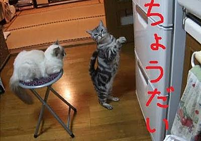 猫缶ちょうだい!二匹編(2足立ち猫) We want canned food in the refrigerator!