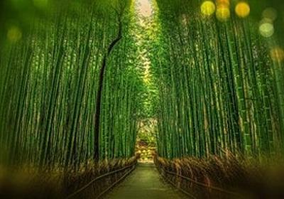 痛いニュース(ノ∀`) : イギリス、竹を庭に植えるブーム到来→繁殖力がすごくて庭を破壊しまくり社会問題化 - ライブドアブログ