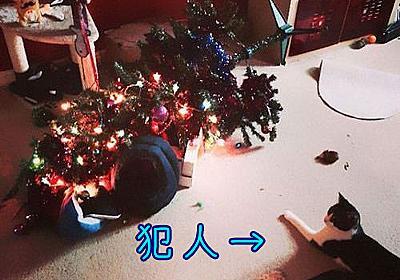 「今年こそ犬や猫からクリスマスツリーを守るぞ!」知恵を絞ったアイデアいろいろ:らばQ