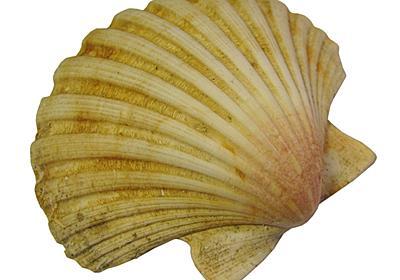 ホタテ貝のキーホルダーの痛い思い出 - AzuYahi日記