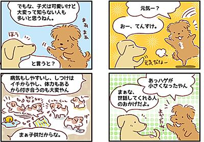 【犬マンガ】成犬を飼う、という選択肢について - こぐま犬と散歩〜元保護犬の漫画日記〜