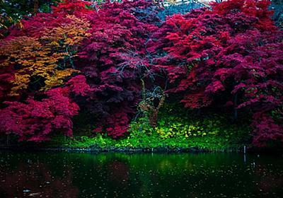 東北の紅葉は早い!Takmar 55mm F1.8で撮った「弘前城 菊と紅葉まつり」の写真24枚 - 「若者のカメラ離れ」離れ