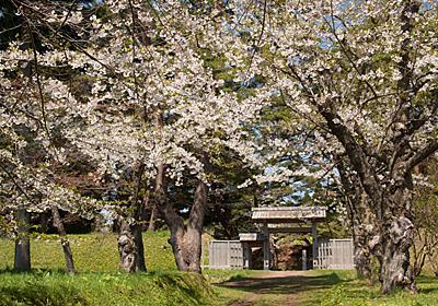 「ほくとの桜を学ぼう会」開催のお知らせ * 一般社団法人 北斗市観光協会・海と大地と新幹線のまち