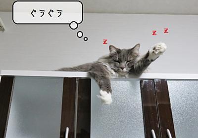 猫雑記 ~わが家の「転勤部屋」~ - 猫と雀と熱帯魚