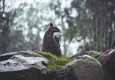 わずか50年で地球の野生生物は3分の2以下に激減していたことが判明(WWF環境報告書) : カラパイア