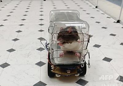 ネズミが車の運転を習得、ストレス軽減効果も 米研究 写真4枚 国際ニュース:AFPBB News