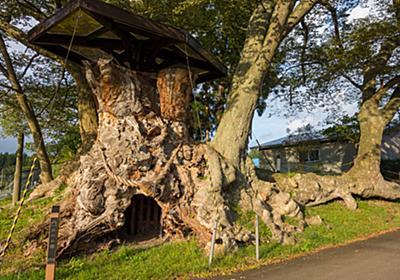 樹齢1000年以上!根かぶ回り日本一の出川の欅(いでがわのけやき) - t0zawa's blog