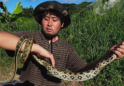 タイワンスジオは買取価格5000円 〜沖縄外来蛇コレクション〜 :: デイリーポータルZ