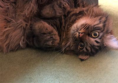 風邪だとは認めない。 - えと的日常〜猫がブログ始めました〜