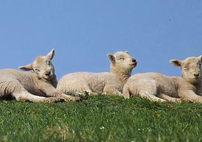 クローン羊ドリーのクローン姉妹たちは寿命が短くなっていないことが判明 - GIGAZINE