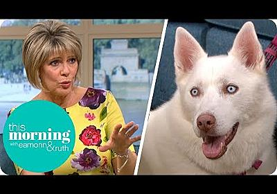 Should Your Dog Become a Vegetarian? | This Morning