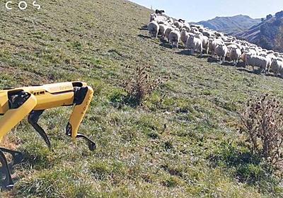 これは天職かもしれない…あのロボットがニュージーランドで牧羊犬に | Business Insider Japan