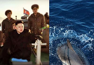 北朝鮮が軍用イルカを飼育している可能性、衛星画像から判明 : カラパイア