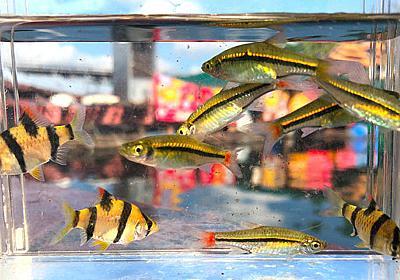 タイの水上家屋で小魚を捕って過ごすだけの連休