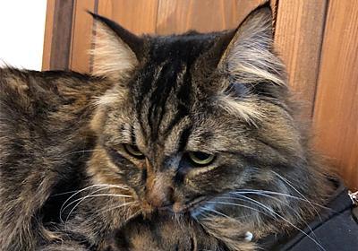 パーカーの紐 - えと的日常〜猫がブログ始めました〜