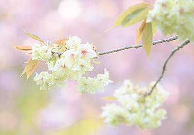 """春にぴったりなLightroomプリセット """"春プリ"""" - toshiboo's camera"""