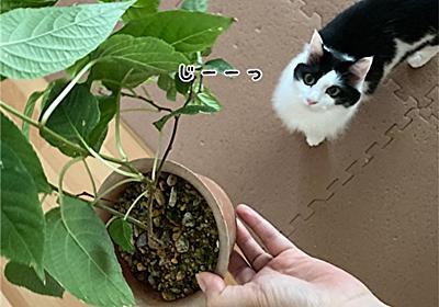 またたびの木 - 福ふく堂 -猫のおもちゃ箱-