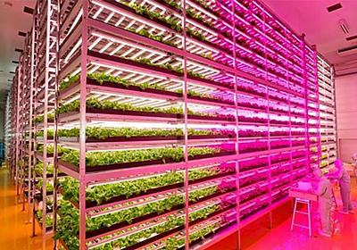 世界最大級の「植物工場」、宮城に新設 WIRED.jp
