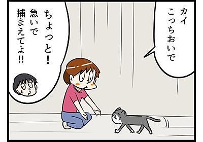 室内飼いの猫が外に出てしまった! 「さすが」と褒められた奥さんの対応とは…… 猫と夫婦の暮らしを描いた漫画 - ねとらぼ