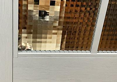 """柴犬いち🐕豆柴にじ on Twitter: """"何度見ても、このお出迎えは面白い #柴犬 #子犬 #お出迎え #モザイク #親バカ #可愛すぎる https://t.co/2lYXh6uGrE"""""""