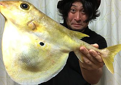 有毒?無毒?深海の怪フグ『ウチワフグ』を食べる(※肝も) :: デイリーポータルZ