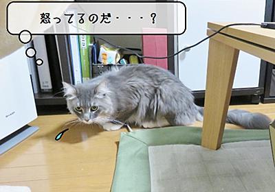 猫雑記 ~しょんぼりむく~ - 猫と雀と熱帯魚
