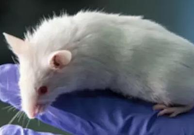 ディープフェイクの音声をネズミが聞き分ける--オレゴン大が研究 - CNET Japan