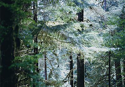 上田義彦の写真展『Forest 印象と記憶』 Gallery 916最後の展覧会 - アート・デザインニュース : CINRA.NET
