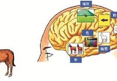 脳は外界の情報データベースを階層的な領野構造で構築していく - 東大など | マイナビニュース