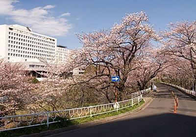 「東京化する」千葉大学よ、それでいいのか   競馬好きエコノミストの市場深読み劇場