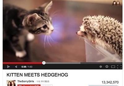もふもふの毛並みに、かわいらしい猫パンチ はてなブックマークで話題を集めた「猫動画」2013 - はてなニュース