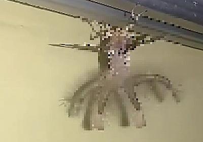 【閲覧注意】羽が生え腹部から4本の毛深い触手が伸びた「エイリアンのような生物」がインドネシアで発見される・・ : ユルクヤル、外国人から見た世界