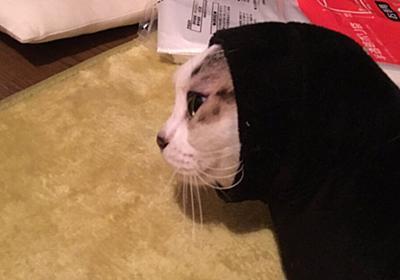 ちょっと目を離したら袖に詰まるのが猫!ご本猫は満足そうだがカオナシのような姿に「妖怪袖もぐり」 - Togetter