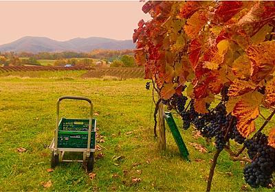 『ワイン体験レポート10月』Vol.1 - ~Many kinds~      いろいろだからオモシロイ