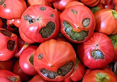 """フルーツトマトの曽我農園 on Twitter: """"実は一番甘い「尻腐れ」というトマトは見た目がこんなですのでほとんど捨てられてきましたが「闇落ち」という名前にしたら人気商品になりました。直売所で絶賛発売中。 https://t.co/eEGiWzKPWl"""""""