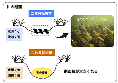淡水貝が「川の地形や流れを変えていた」と明らかに - ナゾロジー