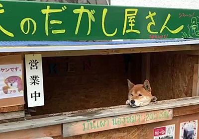 「犬なのでおつりはだせません」北海道には柴犬が店番を務める素敵スポット『犬のだがし屋さん』がある - Togetter