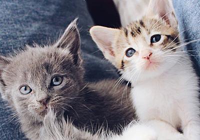 猫が部屋でくつろぐ映像をひたすら流し続けるストリーミングをノルウェー国営放送が開始 - GIGAZINE