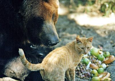 さびしんぼうのクマと怖いもの知らずの猫に芽生えた真の友情物語 : カラパイア