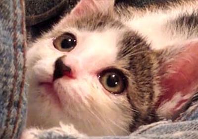 とっておきの猫動画、目の見えない猫を保護した人の1か月の記録映像、そしてその後・・・ : カラパイア