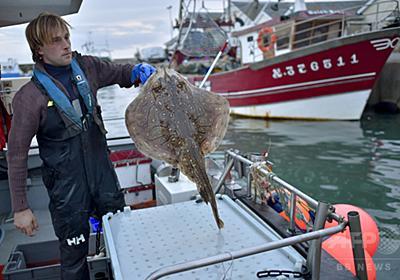 フランス人シェフらが熱視線、日本の伝統技術「魚の生け締め」 写真8枚 国際ニュース:AFPBB News