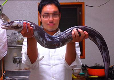 東京湾のぬし「ダイナンアナゴ(クロアナゴ)」を釣って食べよう | 野食ハンマープライス