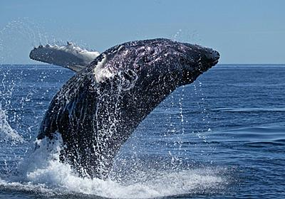 「反捕鯨」の国際世論はどのように形成されたか - 歴ログ -世界史専門ブログ-