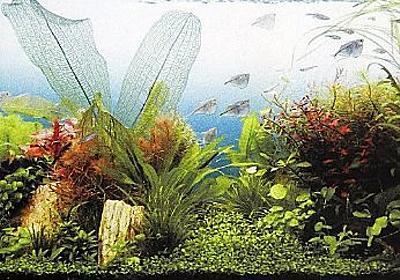 【熱帯魚入門】初心者向けの熱帯魚から水槽用品まで徹底紹介! - キリスタ