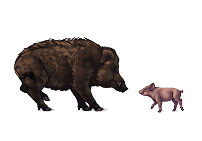 How to Draw Animals: Domestic Pigs, Wild Boars, and Warthogs