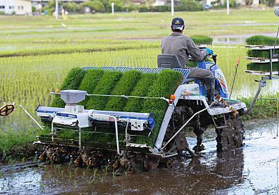 コメ補助金、抜本見直し 専業農家有利に  :日本経済新聞